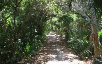 Castle Windy Trail at Canaveral National Seashore