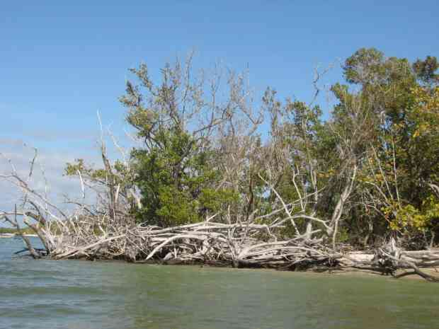 Hurricane Wilma tore up the point on Panther Key