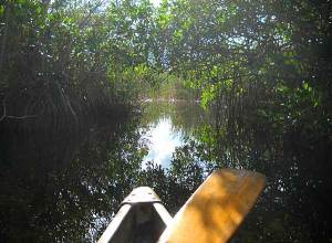 Mangrove tunnel along Everglades National Park Nine Mile Pond canoe trail