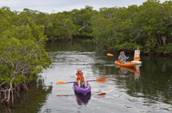 Trail for kayaks and canoes through mangroves at Pennekamp State Park