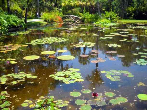 Water lily pond at McKee Botanical Gardens, Vero Beach