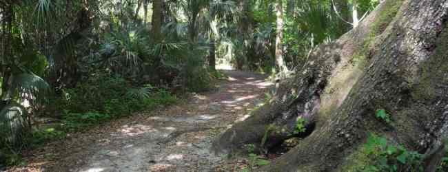 Ancient oaks caress the soul at Highlands Hammock