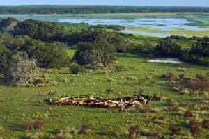 Cattle at Lightsey ranch by Carlton Ward Jr./CarltonWard.com
