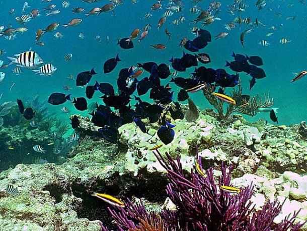 Snorkeling at Looe Key Reef