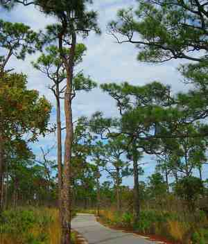 Jonathan Dickinson State Park bike trail