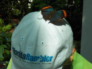 Key West Butterfly Conservatory: Hitchhiking butterfly