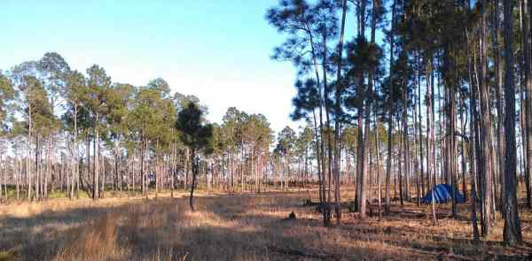 Author Kyle Albinus' primitive camp in Ocala National Park