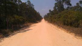 Forest road in Ocala National Forest