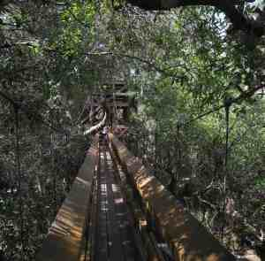 Canopy Walk at Myakka River State Park