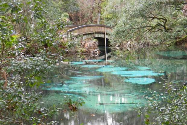 Florida has hundreds of spring-fed streams, but perhaps the most pristine is Juniper Spring and Juniper Run in the Ocala National Forest.