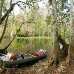 Our picnic site amid cypress trees and knees on the Ocklawaha River.