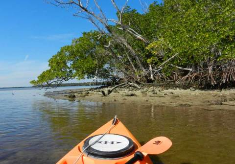 Island in 10,000 Island NWR off Everglades City