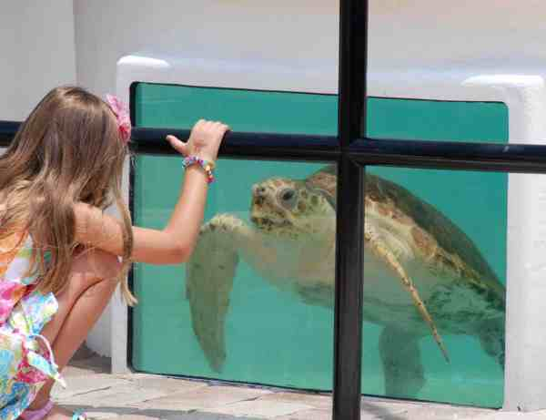 Turtle rehab tank (Photo courtesy Loggerhead Marineline Center)