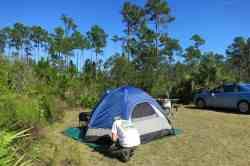 Tent camping site at Long Pine Key in Everglades National Park.