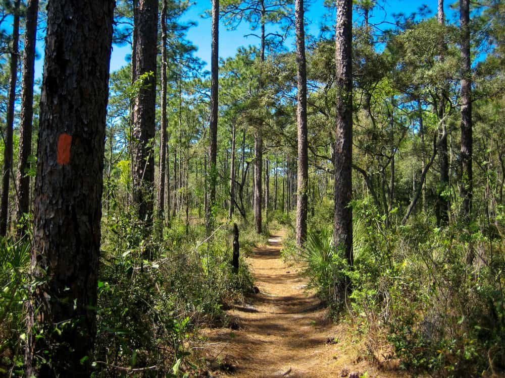 5 Things to Do in Ocala National Forest