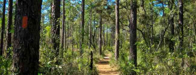 6 Things to Do in Ocala National Forest