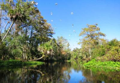 A flock of ibis kept us company as we paddled down Blackwater Creek near Orlando.