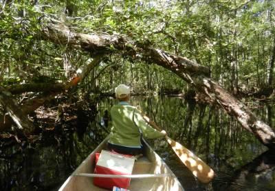 Kayaking Blackwater Creek near Orlando.