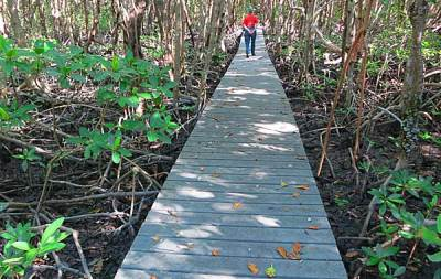 The boardwalk on Sandfly Island inside the 10,000 Islands National Wildlife Refuge.