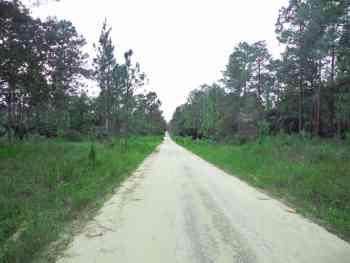 Ocala National Forest roads