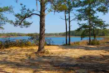 Little Lake Bryant, Ocala National Forest