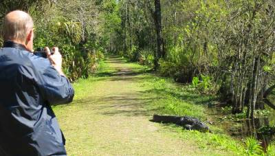 Visitors walked gingerly around this gator at Corkscrew Bird .ookery Swamp Trail