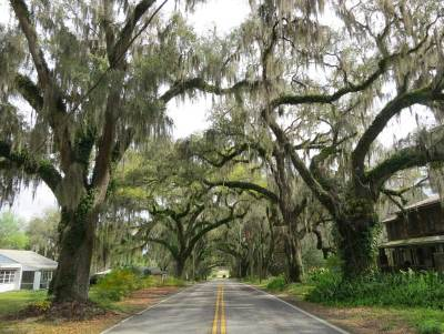Not far from the Withlacoochee State Trail, the Avenue of Oaks in Floral City.