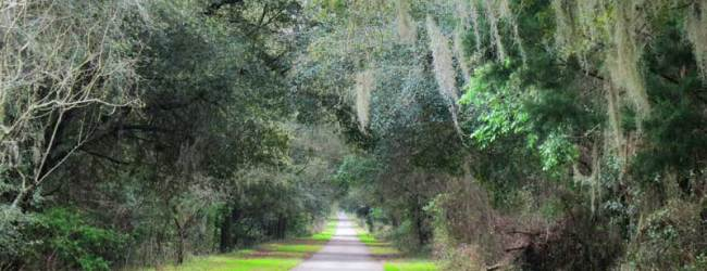 Withlacoochee State Trail: Smooth and scenic