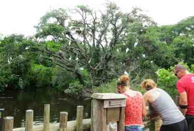 The bird rookery at St. Augustine Alligator Farm is home to hundreds of nests.