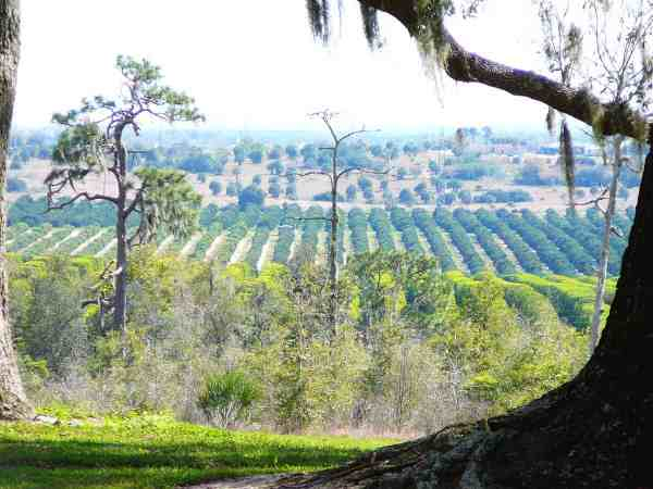 Bok Tower view: Yes, you are on a hill.