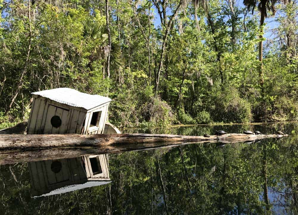 A Sunken Boat Is A Haven For Turtles Along The Silver River. (Photo: