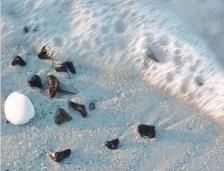 shark teeth at Caspersen Beach