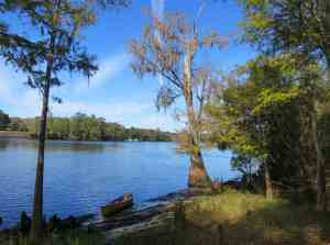 A view along the Suwanee River near Gopher Creek.