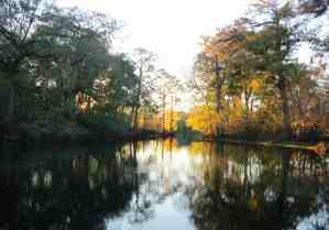 Afternoon light over the spring at Fanning Springs State Park on the Suwanee River.