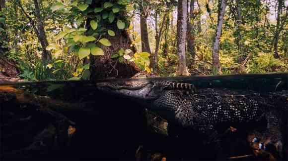 Scene filmed in Everglades from National Parks Adventure IMAX movie.
