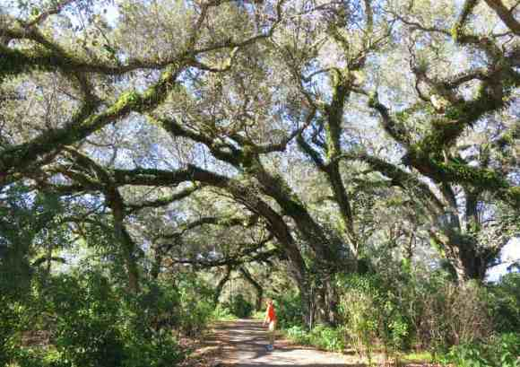 Hiking at Tree Tops Park and Pine Island Ridge Natural Area in Davie,