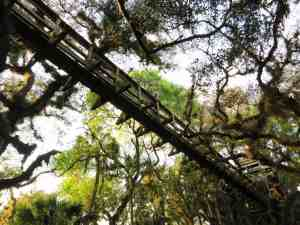 The canopy walk at Myakka River State Park.