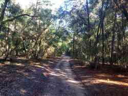 Multi-use trail in Lower Wekiva River Preserve State Park