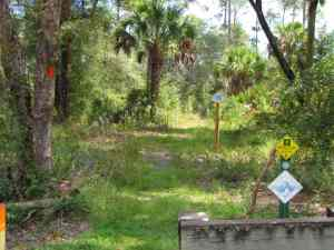 Florida Trail in Seminole State Forest