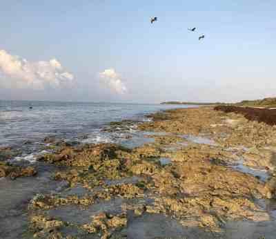 The rocky shoreline along Bahia Honda's Sandspur Campround. (Photo: Bonnie Gross)