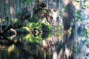 Frog Creek and Terra Ceia Preserve State Park in Palmetto