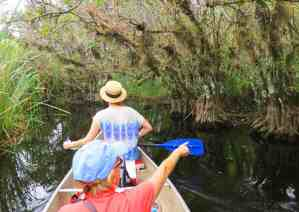 The airplants along the Turner River in Big Cypress Preserve are thick and at eye level as you kayak through. (Photo: David Blasco)