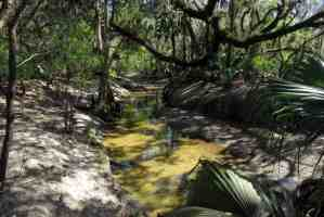 A tributary leading into the Alafia River near Tampa. A nice place to wade a bit and there's a picnic table nearby too. (Photo: Bonnie Gross)