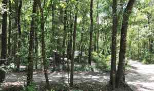 Campsites in Dogwood Campground, O'Leno State Park, HIgh Springs.