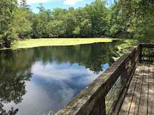 The River Sink at O'Leno State Park