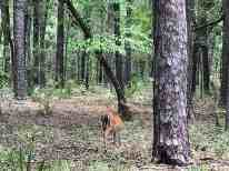 Wildlife abounds along the Nature Trail at O'Leno State Park.