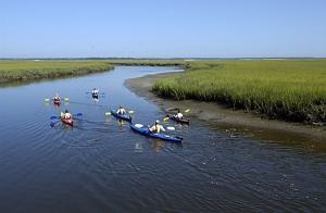 Kayak Amelia tour of the salt marshes