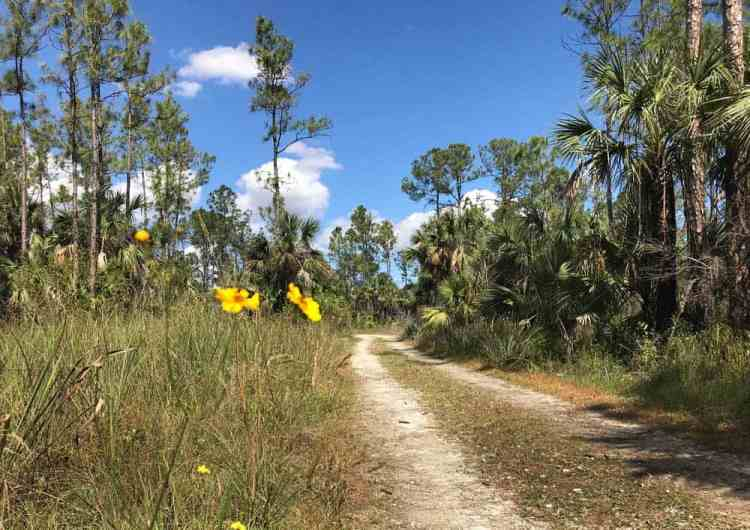 Where the Florida Trail crosses Alligator Alley, you can start a hike into the Everglades. (Photo: Bonnie Gross)
