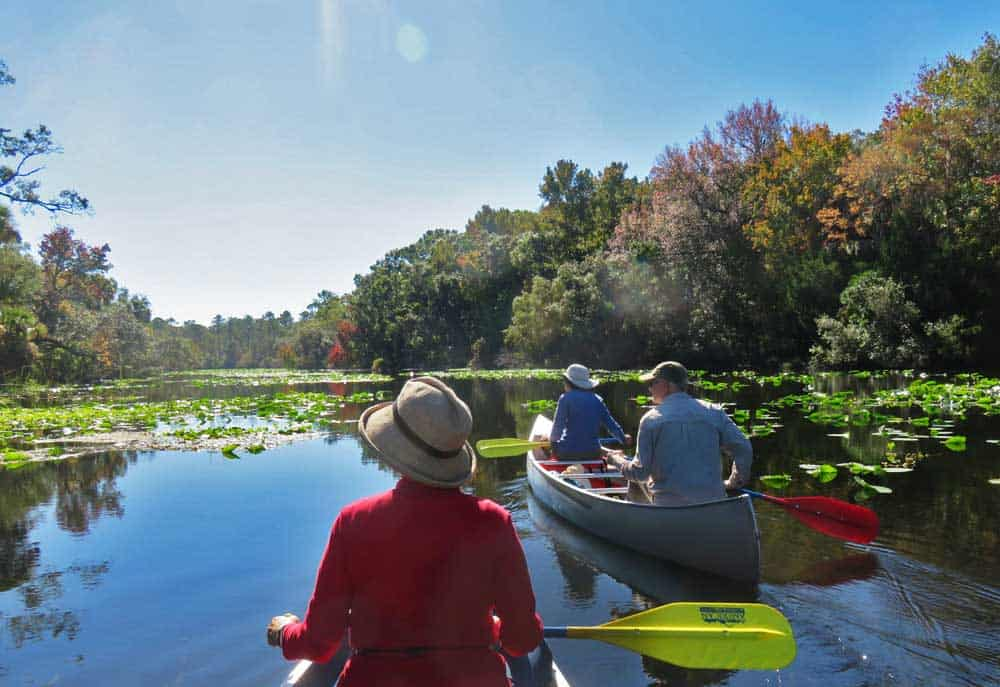 Alexander Springs in Ocala National Forest: Easy scenic paddling; lots of wildlife