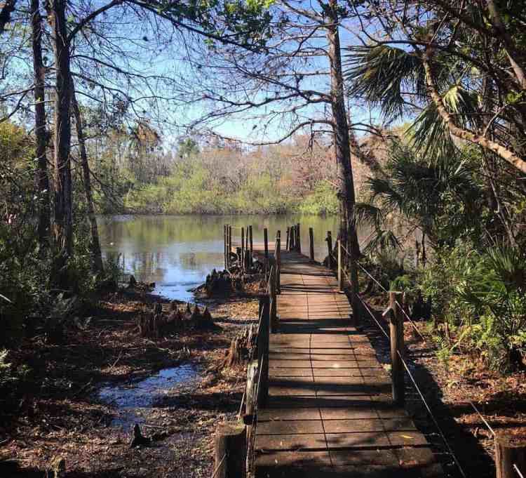 "One hiking trail in Fakahatchee Strand takes you to this spot -- the boardwalk next to the ""Fakahatchee Hilton."" (Photo: Bonnie Gross)"